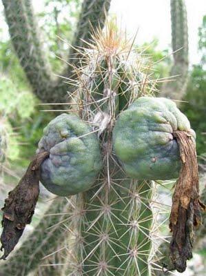 cactus-03