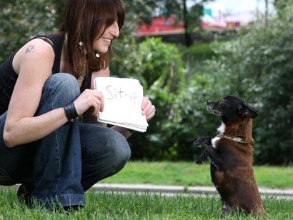 perro  que sabe leer curionotas