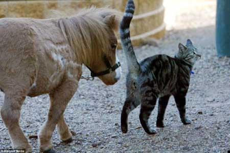 caballo mas pequeño del mundo1
