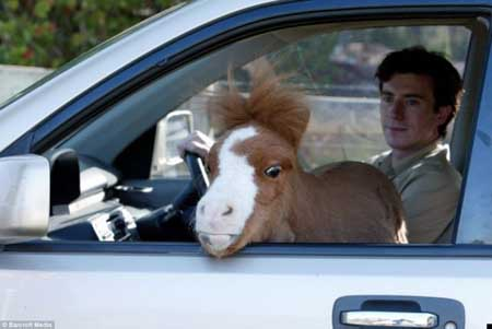 caballo mas pequeño del mundo2