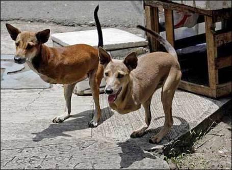 dogaroo perro canguro