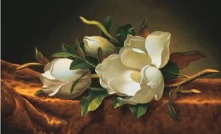 heade-magnolia