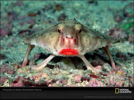 pez labios