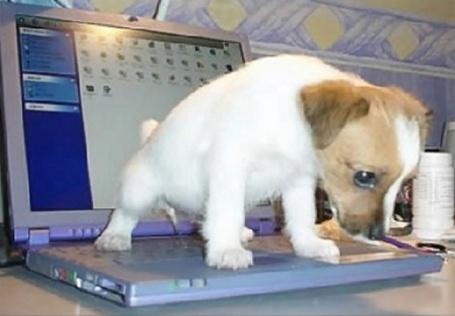 puppy-gotta-pee